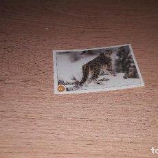 Coleccionismo Cromos antiguos: ANIMALES 2020 NUEVA COLECCION CROMO 135. Lote 221739635