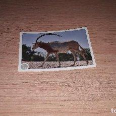 Coleccionismo Cromos antiguos: ANIMALES 2020 NUEVA COLECCION CROMO 260. Lote 221739662