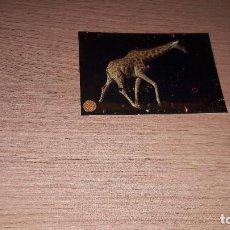 Coleccionismo Cromos antiguos: ANIMALES 2020 NUEVA COLECCION CROMO 152. Lote 222091553