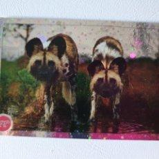 Coleccionismo Cromos antiguos: CROMO Nº 252 EL GRAN ÁLBUM DEL MUNDO ANIMAL 2020 [ANIMALES 2020]. Lote 222282301