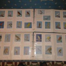 Coleccionismo Cromos antiguos: CANARIOS SASSONI COLECCIONISTA DE AVES PAJAROS 32 CROMOS O TARJETAS , NATURALEZA ANIMALES. Lote 238650970