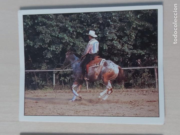 Nº 157 CROMO - ALBUM CABALLOS - COMPAÑEROS DEL HOMBRE HACE TIEMPO - PANINI 1990 - CROMO SIN PEGAR (Coleccionismo - Cromos y Álbumes - Cromos Antiguos)