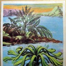 Coleccionismo Cromos antiguos: CROMO ALBUM CROMHISTORIA DE MAGA NUMERO 7 (RECUPERADO). Lote 261797650