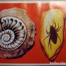 Coleccionismo Cromos antiguos: CROMO ALBUM CROMHISTORIA DE MAGA NUMERO 15 (RECUPERADO). Lote 261797870
