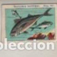 Coleccionismo Cromos antiguos: CROMOS PUBLICIDAD CHOCOLATES JUNCOSA COLE HISTORIA NATURAL - CROMOS PEQUEÑOS PEDIR FALTAS. Lote 263006590