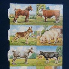 Coleccionismo Cromos troquelados antiguos: LAMINA CROMOS TROQUELADOS MLP- 983A. ANIMALES. BRILLO.¡¡DIFICIL¡¡. Lote 178730546