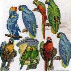 Coleccionismo Cromos troquelados antiguos: LOTE DE 8 CROMOS TROQUELADOS DE PÁJAROS. LOROS Y PAPAGAYOS. 8,50 CM. Lote 50024253
