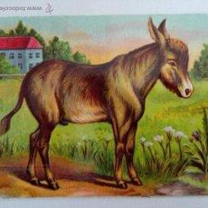Coleccionismo Cromos troquelados antiguos: ANTIGUO CROMO TROQUELADO ANIMALES, BURRO, MEDIDAS 12 X 8,5 CM. Lote 51221620