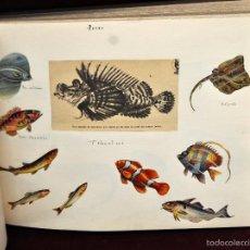 Coleccionismo Cromos troquelados antiguos: INTERESANTE Y CURIOSO ALBUM ARTESANAL DE BIOLOGIA Y ZOOLOGIA DE PRINCIPIOS DEL SIGLO XX. Lote 58391490