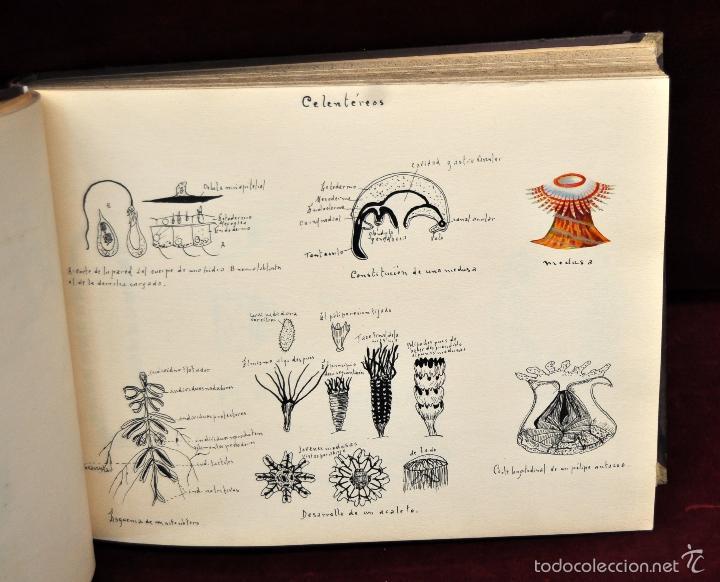 Coleccionismo Cromos troquelados antiguos: INTERESANTE Y CURIOSO ALBUM ARTESANAL DE BIOLOGIA Y ZOOLOGIA DE PRINCIPIOS DEL SIGLO XX - Foto 6 - 58391490