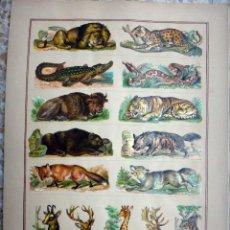 Coleccionismo Cromos troquelados antiguos: CROMOS TROQUELADOS, SIGLO XIX, LAMINA TIPO CARTEL, ANIMALES , ORIGINAL. Lote 66848906