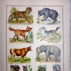 Coleccionismo Cromos troquelados antiguos: CROMOS TROQUELADOS, SIGLO XIX, LAMINA TIPO CARTEL, ANIMALES , ORIGINAL. Lote 66848982