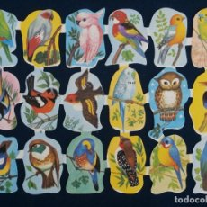 Coleccionismo Cromos troquelados antiguos: LAMINA CROMOS TROQUELADOS ESPAÑOLES EDIVAS 3. PAJAROS. Lote 206946127