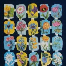 Coleccionismo Cromos troquelados antiguos: LAMINA CROMOS TROQUELADOS ESPAÑOLES EDIVAS 10. FLORES. Lote 206946163