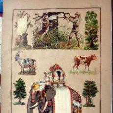 Coleccionismo Cromos troquelados antiguos: CROMOS TROQUELADOS, SIGLO XIX, LAMINA TIPO CARTEL, CAZA Y ELEFANTE INDIA , ORIGINAL . Lote 104064155