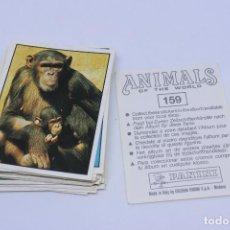 Coleccionismo Cromos troquelados antiguos: LOTE 47 CROMOS COLECCIÓN ANIMALS OF THE WORLD - PANINI. Lote 126043163