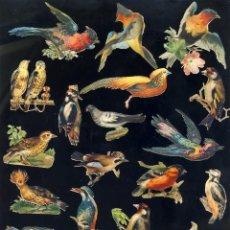 Coleccionismo Cromos troquelados antiguos: LOTE DE 22 CROMOS TROQUELADOS ANTIGUOS DE PAJAROS. TAMAÑO DEL PRIMER CROMO 8,5 X 5,5 CMS. Lote 138421874