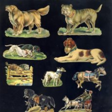 Coleccionismo Cromos troquelados antiguos: LOTE DE 13 CROMOS TROQUELADOS ANTIGUOS DE PERROS Y CABALLOS. TAMAÑO DEL PRIMER CROMO 8 X 6 CMS. Lote 156916774