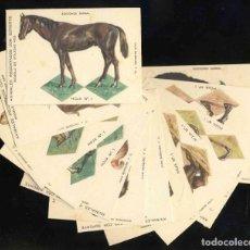 Coleccionismo Cromos troquelados antiguos: COLECCION COMPLETA DE 12 CROMOS ANIMALES RECORTADOS (ED.BARSAL, J.BARGUÑO, SERIE 1) (VER FOTO ADIC). Lote 204167908