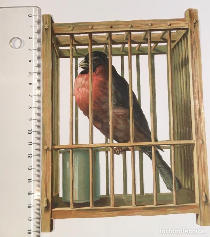 Coleccionismo Cromos troquelados antiguos: Cromo Troquelado Pajaro Jaula Antiguo Siglo XIX - Foto 3 - 221612927