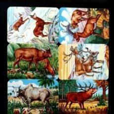 Coleccionismo Cromos troquelados antiguos: LÁMINA CROMOS TROQUELADOS ALEMANES KRUGER DE PICAR CON RELIEVE AÑOS 60/70 ANIMALES SALVAJES. Lote 277659453