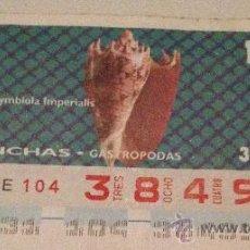 Cupones ONCE: CUPÓN DE LA ONCE. 31 DE ENERO DE 1994. DEDICADO A LAS CONCHAS MARINAS.. Lote 31814843