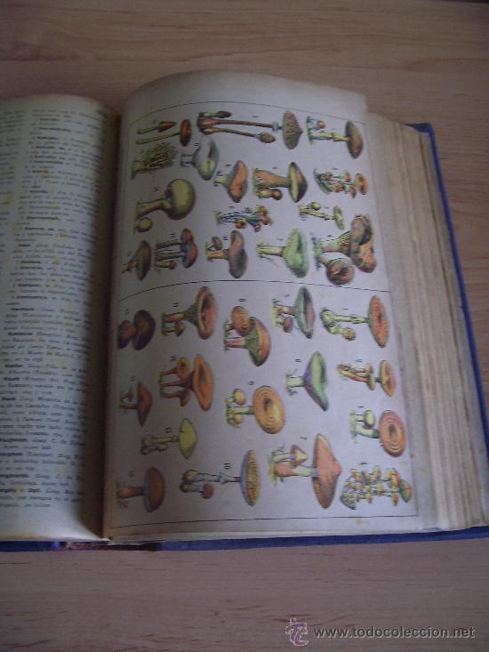 Diccionarios antiguos: NOVISIMO DICCIONARIO ENCICLOPEDICO, POPULAR ILUSTRADO DE LA LENGUA CASTELLANA. TOMO III. LITERACOMIC - Foto 4 - 27241212