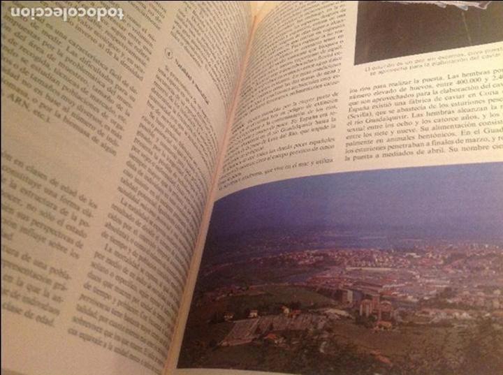 Diccionarios antiguos: Diccionario de la Naturaleza - Foto 3 - 90146260