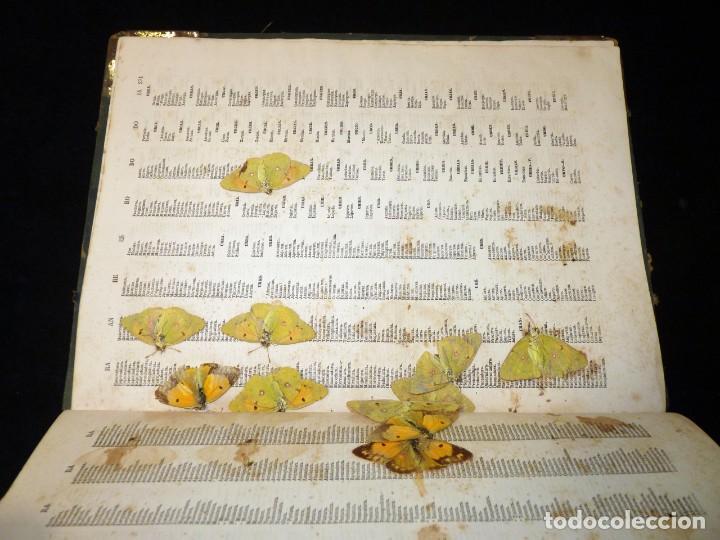 Diccionarios antiguos: NUEVO DICCIONARIO DE LA LENGUA CASTELLANA CON UN SUPLEMETO. LIBRERIA DE CH. BOURET, 1885. 32,5x25,5 - Foto 21 - 195354293