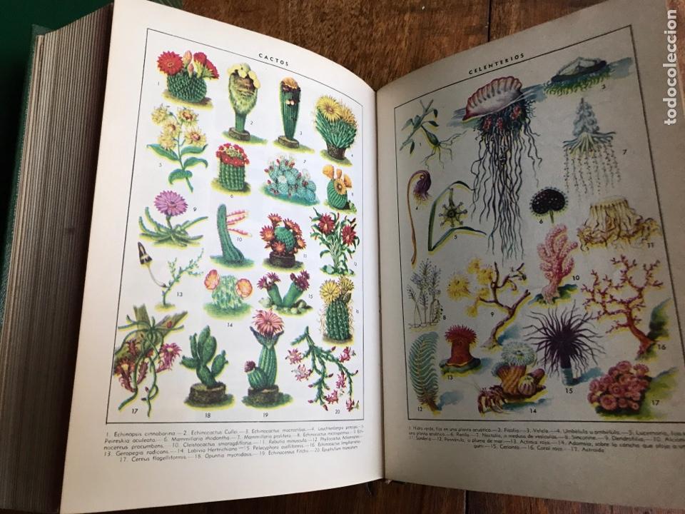 Diccionarios: Diccionario Enciclopédico Ilustrado . Ramon Sopena 1962 - Foto 5 - 177945810