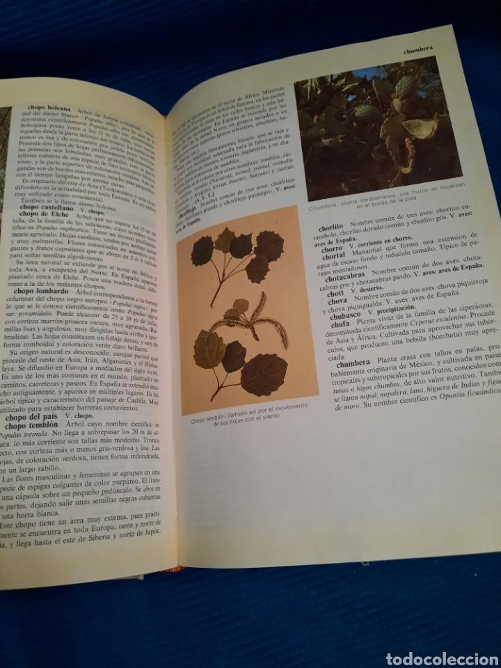 Diccionarios: DICCIONARIO DE LA NATURALEZA BBV 2003 - Foto 4 - 271119828
