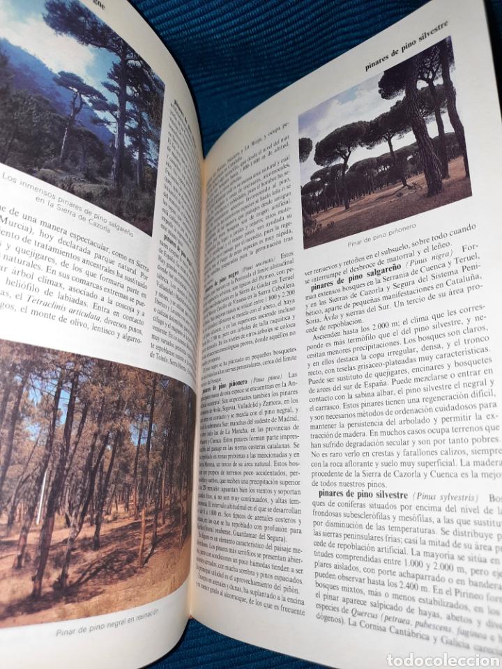 Diccionarios: DICCIONARIO DE LA NATURALEZA BBV 2003 - Foto 5 - 271119828
