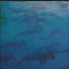 Discos de vinilo: THE BEYOND CRAWL. Lote 21859183