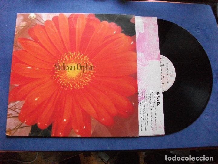 SHELLEYAN ORPHAN CENTURY FLOWER LP SPAIN 1989 PDELUXE (Música - Discos - LP Vinilo - Pop - Rock - New Wave Extranjero de los 80)