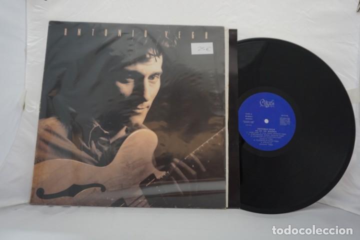 VINILO LP - ANTONIO VEGA NO ME IRÉ MAÑANA / 4P-025LE (Música - Discos - Singles Vinilo - Otros estilos)