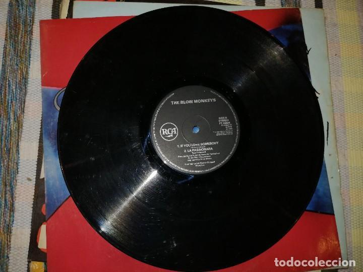 Discos de vinilo: LOTE 2 DISCOS POP ROCK. BLOW MONKEYS,THE SPRINGTIME FOR THE WORLD Y TRANSVISION VAMP, (I JUST WANNA) - Foto 2 - 236705145