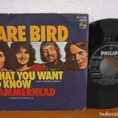 Discos de vinilo: RARE BIRD - WHAT YOU WANT TO KNOW + HAMMERHEAD - PHILIPS (1971). Lote 254527300