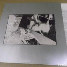 Discos de vinilo: THE HOUSE OF LOVE (LP) IDEM 1990 AÑO – 1990 – ENCARTE CON CREDITOS. Lote 277073408
