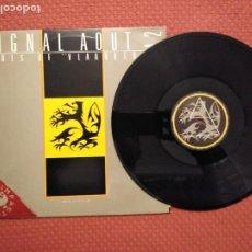 "Discos de vinilo: SIGNAL AOUT 42 - GIRLS OF ""VLAANDEREN"" DISCO SMASH MADE IN BELGIUM. Lote 296901528"