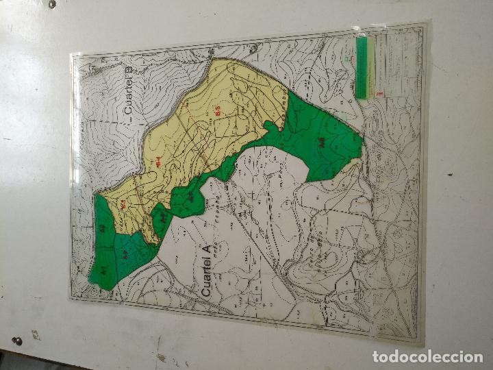 Documentos antiguos: 67 x 56 cm 4 mapas transparencias ayuntamiento castelar de la frontera. plano de zonificacion cadiz - Foto 5 - 118809763