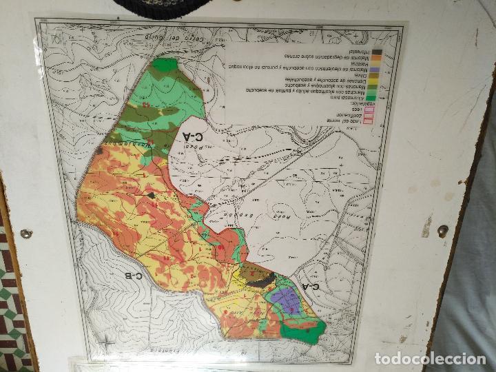 Documentos antiguos: 67 x 56 cm 4 mapas transparencias ayuntamiento castelar de la frontera. plano de zonificacion cadiz - Foto 10 - 118809763