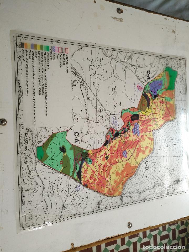 Documentos antiguos: 67 x 56 cm 4 mapas transparencias ayuntamiento castelar de la frontera. plano de zonificacion cadiz - Foto 11 - 118809763