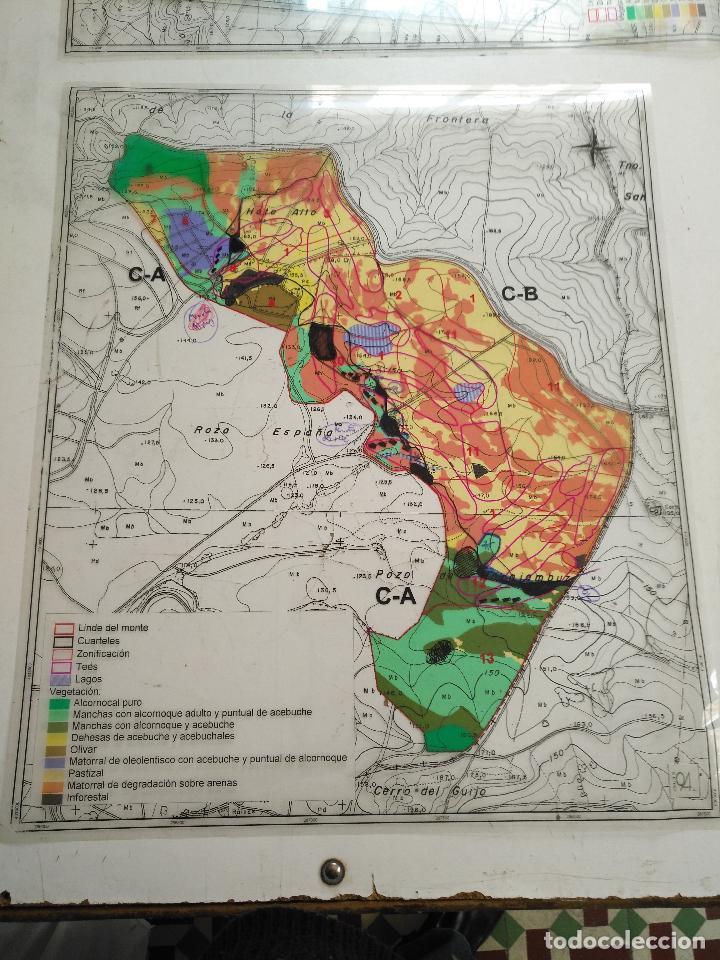 Documentos antiguos: 67 x 56 cm 4 mapas transparencias ayuntamiento castelar de la frontera. plano de zonificacion cadiz - Foto 12 - 118809763