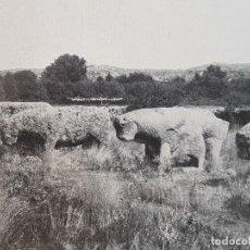 Documentos antiguos: EL TIEMBLO AVILA TOROS DE GUISANDO LAMINA HUECOGRABADO AÑOS 30. Lote 155707202