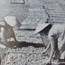 Documentos antiguos: IBIZA SECADO DE ALBARICOQUES ANTIGUA LAMINA HUECOGRABADO AÑOS 50. Lote 178582693
