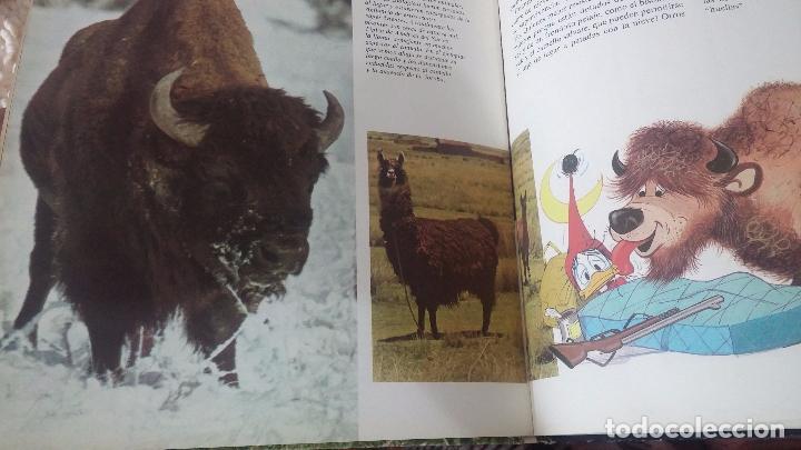 Enciclopedias antiguas: ENCICLOPEDIA DISNEY - Foto 22 - 83573860