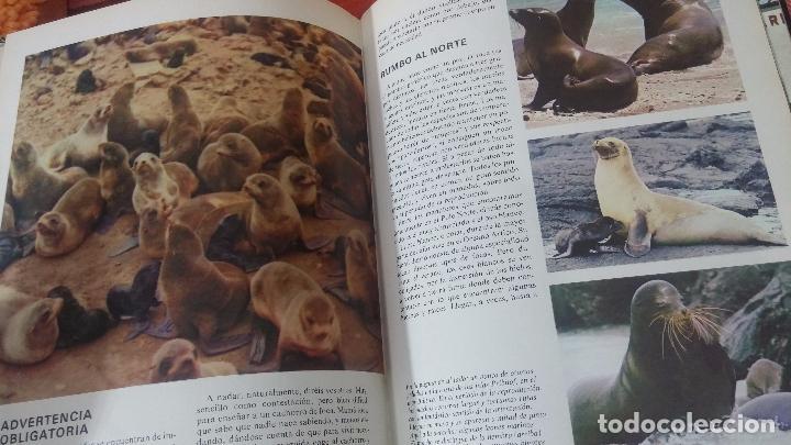 Enciclopedias antiguas: ENCICLOPEDIA DISNEY - Foto 23 - 83573860