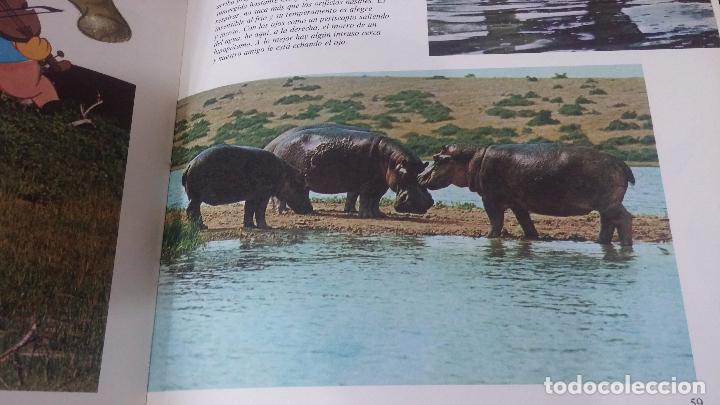 Enciclopedias antiguas: ENCICLOPEDIA DISNEY - Foto 24 - 83573860