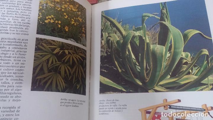 Enciclopedias antiguas: ENCICLOPEDIA DISNEY - Foto 26 - 83573860