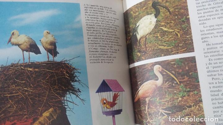 Enciclopedias antiguas: ENCICLOPEDIA DISNEY - Foto 44 - 83573860